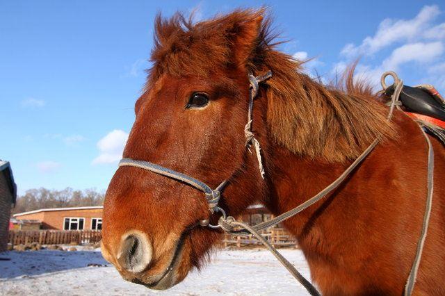 塞翁が馬 人間 意味 万事