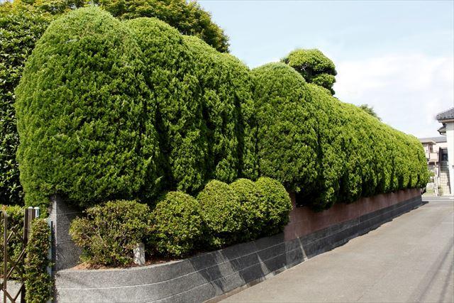 生垣のススメ。植物で作る垣根「...