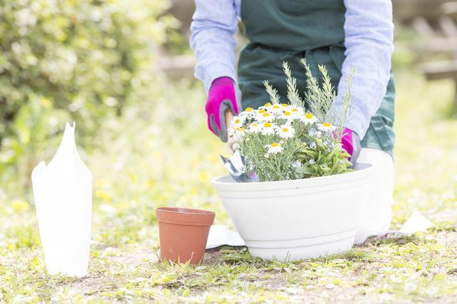 コツ 寄せ 植え 葉牡丹おしゃれな寄せ植えの作り方のコツは?